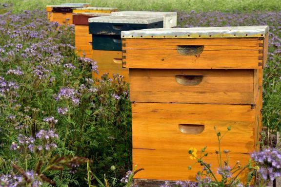 beehive-3703426_1920 Home